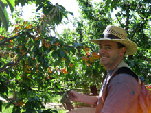 Jeff Varley Picking Fruit